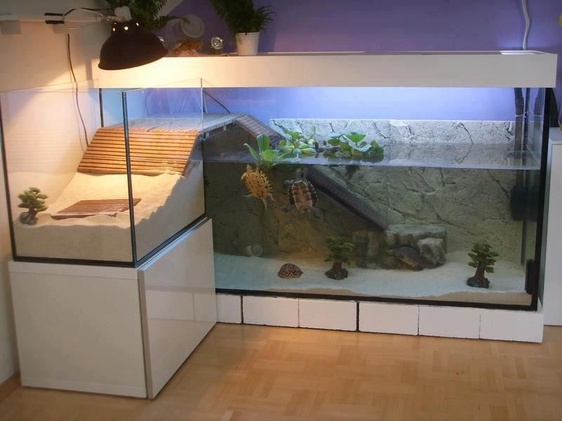 How to Design a Turtle Terrarium? – Need to Know More